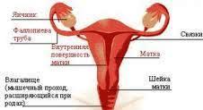 фото женщины половые органы